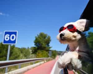 Hundegitter im Test: So halt nicht!