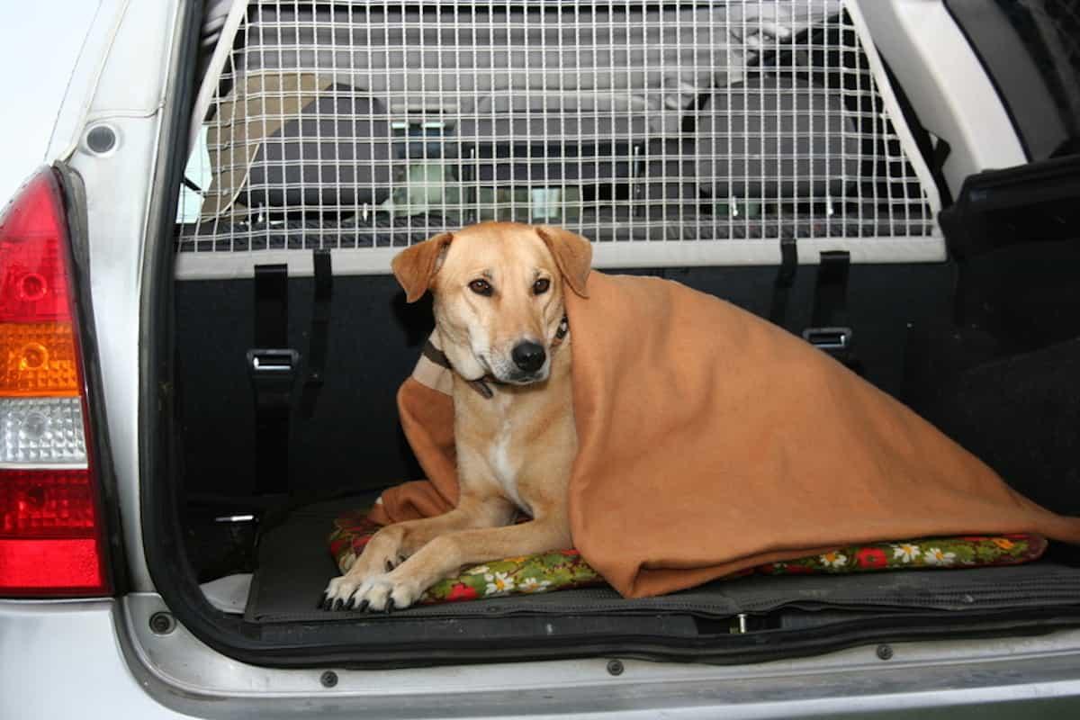 hundetransportbox erh ht sicherheit f r hund und autofahrer. Black Bedroom Furniture Sets. Home Design Ideas