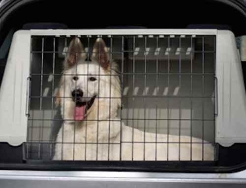 Hundetransportbox erhöht die Sicherheit im Auto