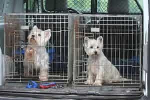Starre Hundetransportbox - aber nicht so