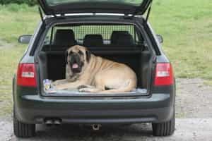 Hund im Kombi hinten