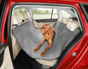 Hundetransport im Skoda