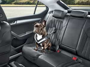 Skoda Hundetransport mit Gurt